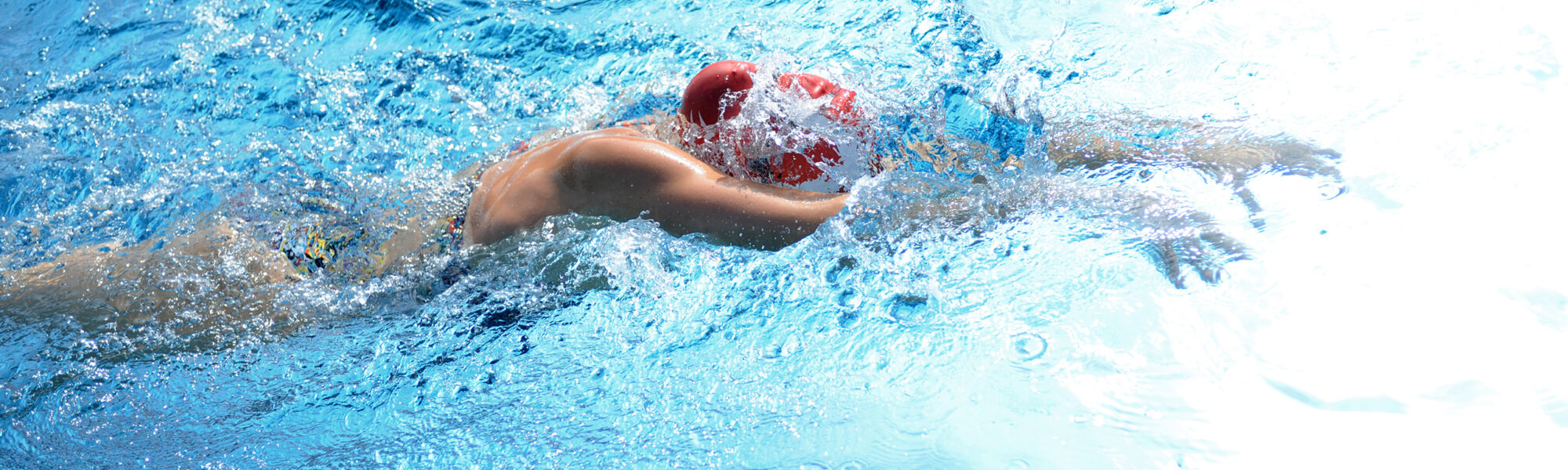 Schwimmclub Aarefisch