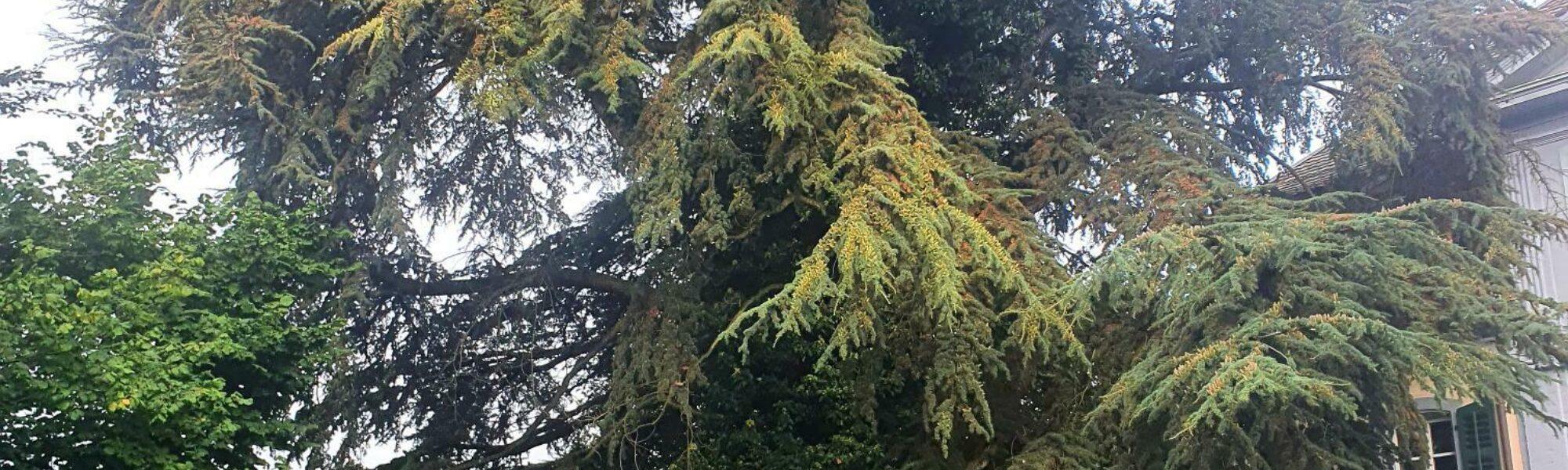 Klimapreis 2021: mein schönster Baum